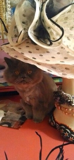 The Cat in The Derby Hat by Haute Tramp